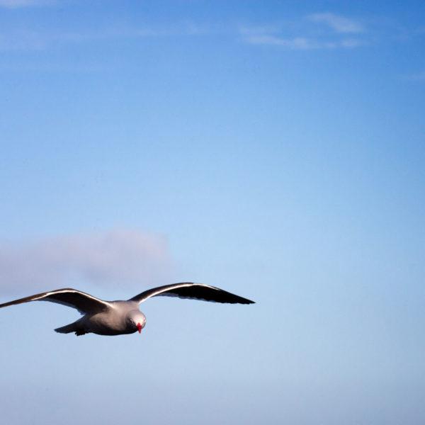 Dolphin-Gull---Cedric-Delves